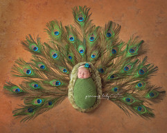 peacockJenniferabrcacopy.jpg
