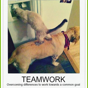 Nå målet med effektivt samarbejde