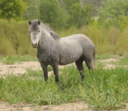 Héla from Hestar Ranch
