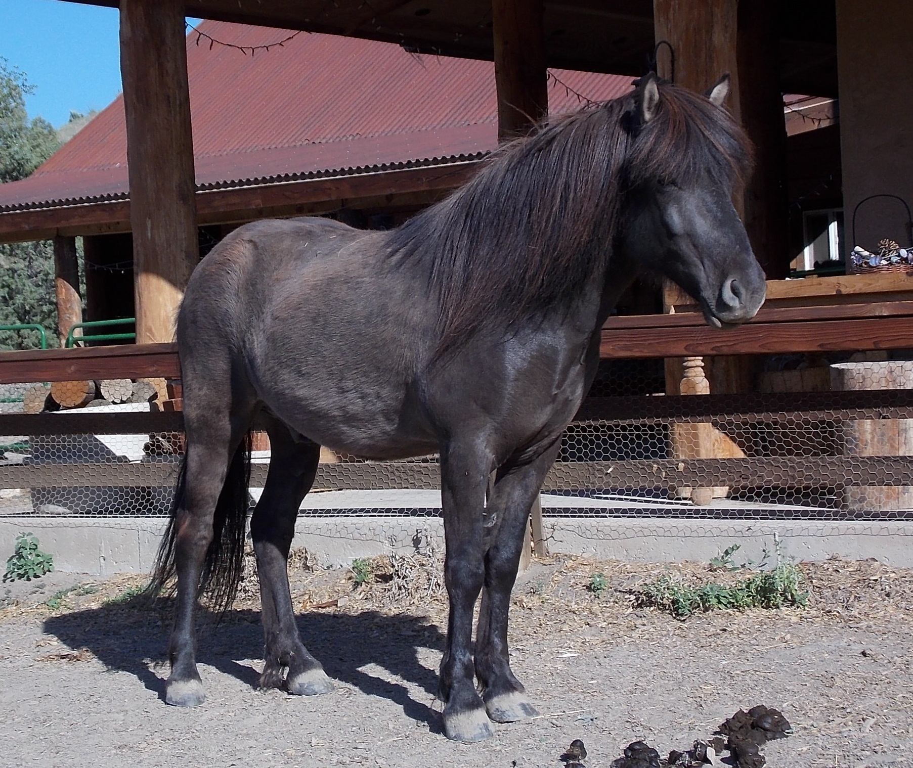Eylimi from Hestar Ranch