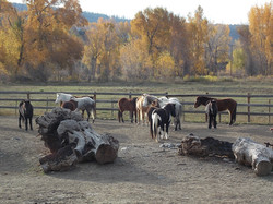 14 Horses left... 4 sold...