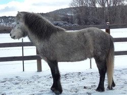 Hreindýr from Hestar Ranch