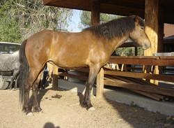 Eldfrá from Hestar Ranch