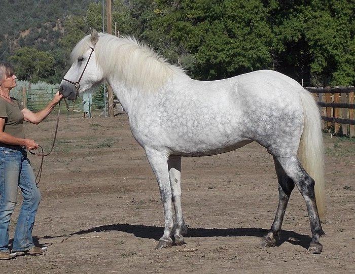 Hára from Hestar Ranch