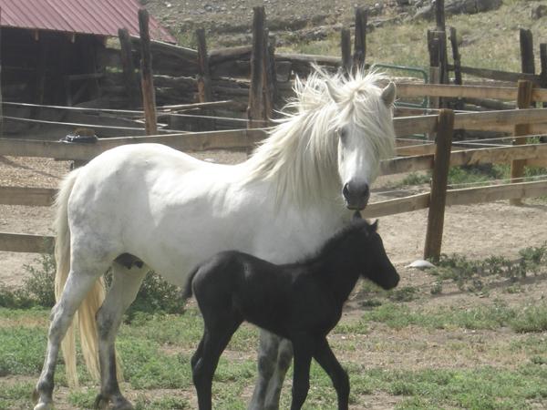 Blue as my breeding mare