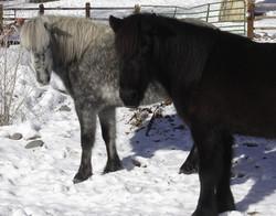 Gajafar in winter
