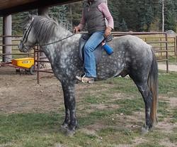 Haukur riding