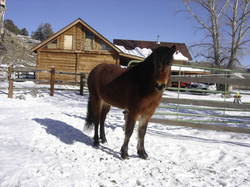 Eldfrá in winter coat