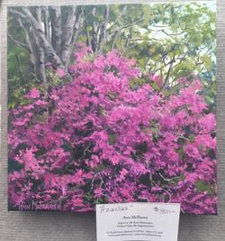 Azaleas - $80