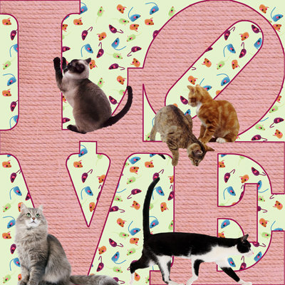 Cats - LOVE369