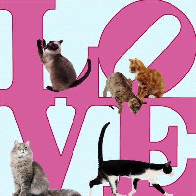 Cats - LOVE377