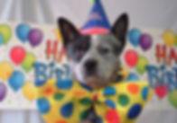 Happy-birthday dog pic.jpg