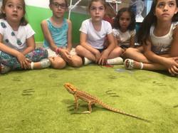 1 Reptiles (2)