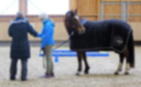 Schnuppercoaching_für_Jugendliche_horse-