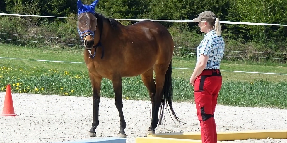 Schnuppercoaching in Weisweil – mit Pferden des Vereins «Zweites Leben für Sportpferde» (1)