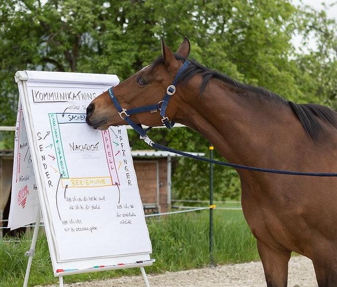 Pferdeunterstuetztes Teamcoaching_horse-
