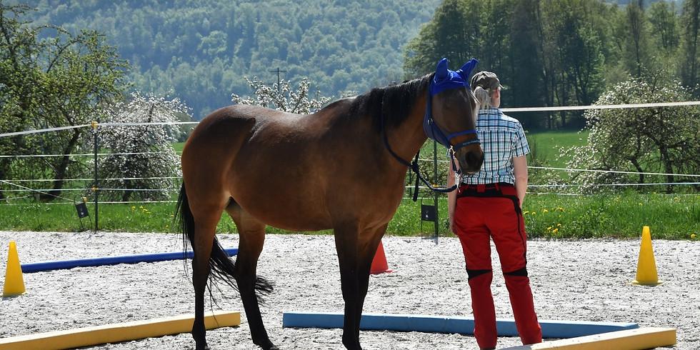Schnuppercoaching mit Pferden in Weisweil (1)