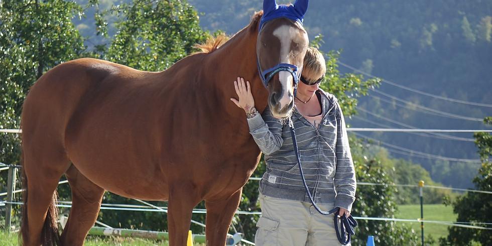 Schnuppercoaching in Weisweil – mit Pferden des Vereins «Zweites Leben für Sportpferde»