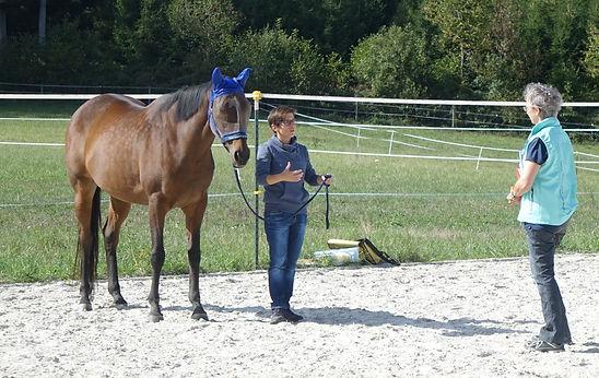 Schnuppercoaching mit Pferden - horse-co