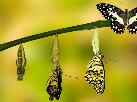 La mariposa 🦋 y cómo no meternos en los asuntos de los demás