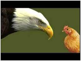 Parábola del águila y las gallinas.