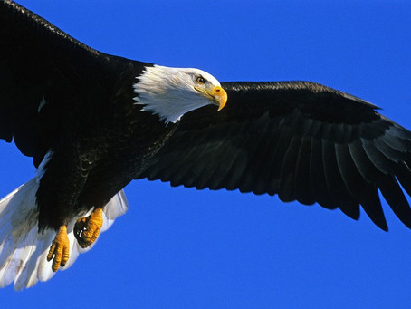 La fábula del 🦅 Águila 🦅