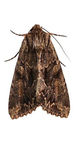 Indianmeal Moth & Clothing Moth Exterminators
