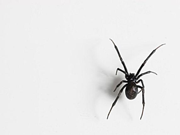 Spider Exterminators