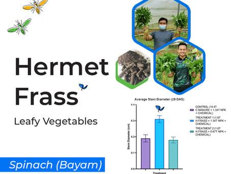 Hermet Frass on Leafy Vegetables