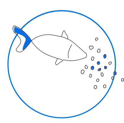 img product fish.png