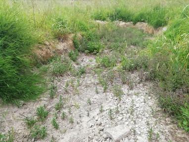 Étiages sévères dès le début juillet sur le bassin de l'Yèvre, suivez l'état des écoulements
