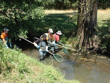 Pêche électrique sur la rivière de l'Annain (Mehun-sur-Yèvre / Allouis)