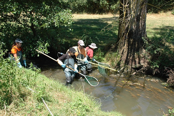 Dans le cadre d'une meilleure connaissance physico-chimique et biologique de ce cours d'eau, afin d'identifier précisemment sont potentiel écologique au préalable de travaux portés par le SIVY, prévus dès septembre 2016, le Laboratoire de Tourraine réalise au cours plusieurs analyses au cours de l'année, ici une pêche électrique (IPR) réalisée le 26 juillet 2016
