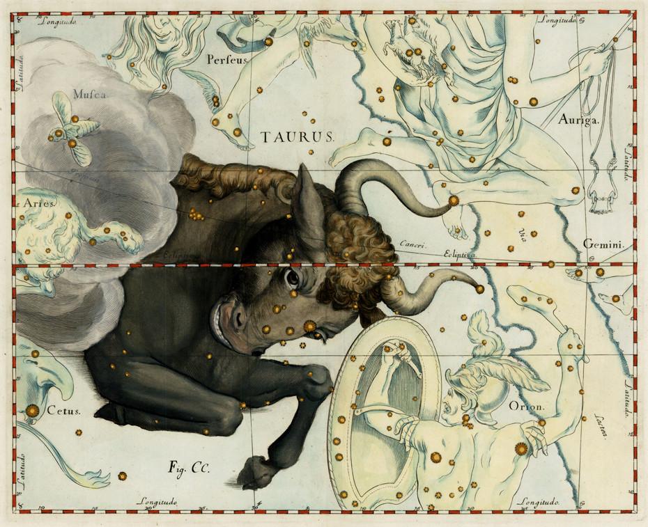 Constellation du Taureau dans l'atlas d'Hevelius (1690)