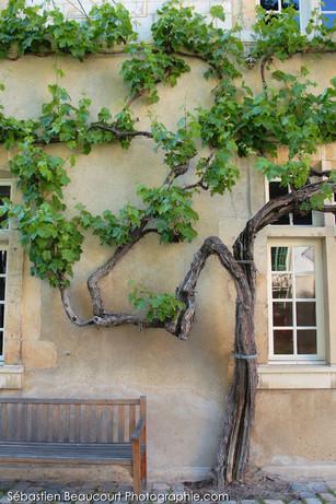 Les plus vieilles vignes de France