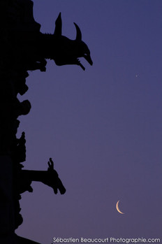 Gargouilles cathédrale de Reims