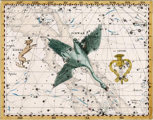 La constellation du Cygne dans l'atlas de Bode (1801)