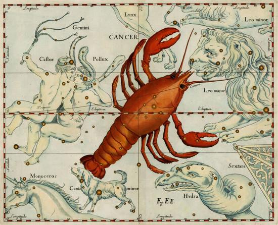 Constellation du Cancer sous la forme d'une écrevisse dans l'atlas d'Hevelius (1630)