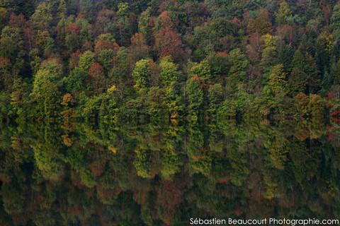 Miroir de la forêt