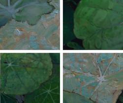 peeters-paintings.com-detail 1616 FC