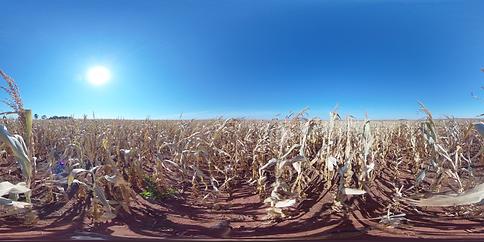Image 12 - Corn Field - Dry - Tall VID_2