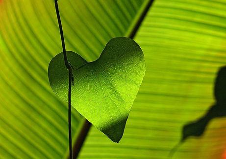 leaf-547400_1920.jpg