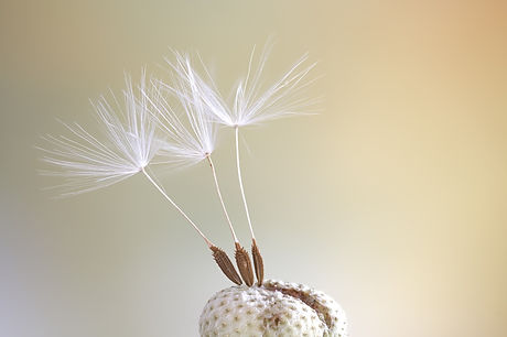 seeds-4306035_1920.jpg