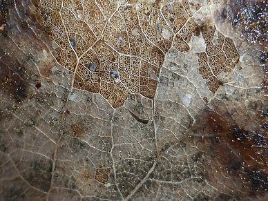 leaf-2147039_1920.jpg