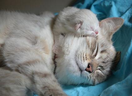 kitten-with-mom-2633283_1920.jpg