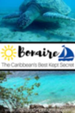 Bonaire Caribben Sea Turtle Snorkel Scuba