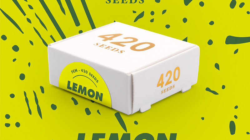 Lemon Snow - Pack 3 semillas