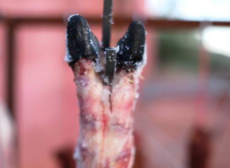 Curing Black Pig Ham