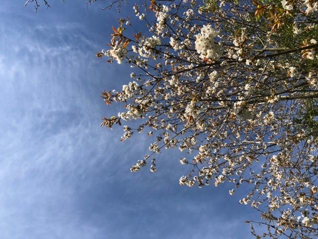 Blooming Skies