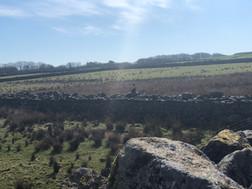 On the Cairn Run